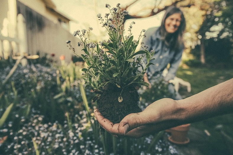9 Gardening Trends That You Would Like to Embrace in 2021
