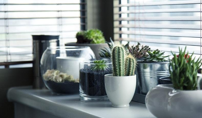 Latest Gardening Trends